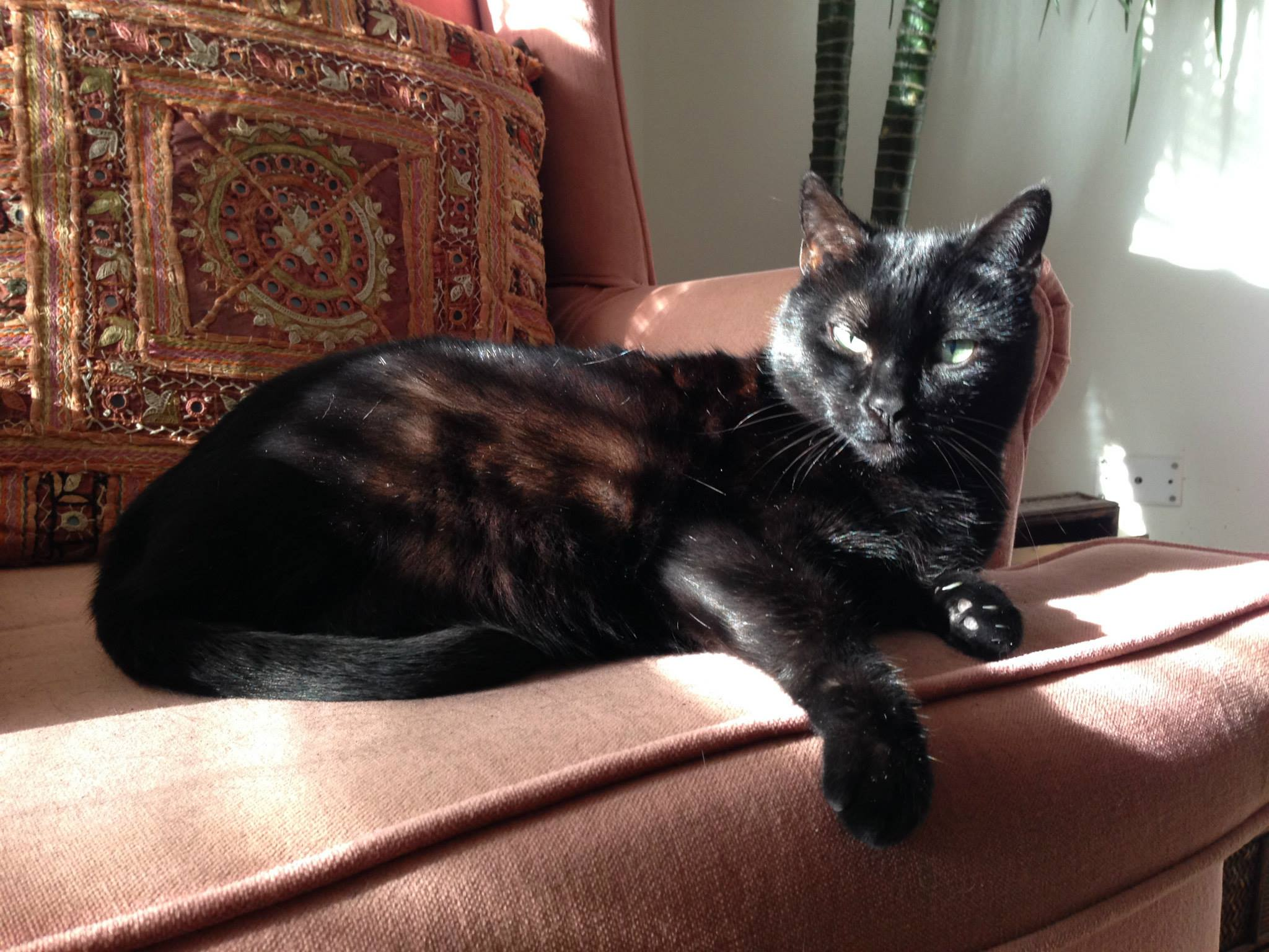 Blackcat2015